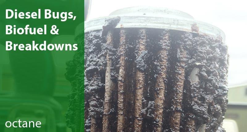 diesel bugs biofuel breakdowns